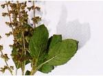 herbs-07