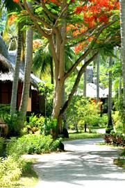 islandvillage_spr3