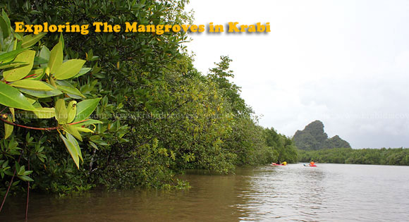 Exploring The Mangroves in Krabi